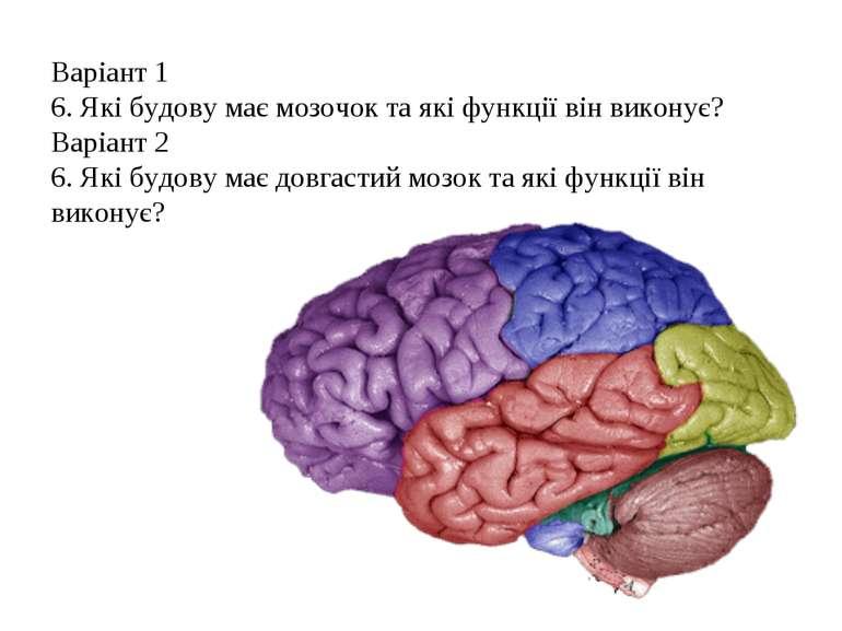 Варіант 1 6. Які будову має мозочок та які функції він виконує? Варіант 2 6. ...