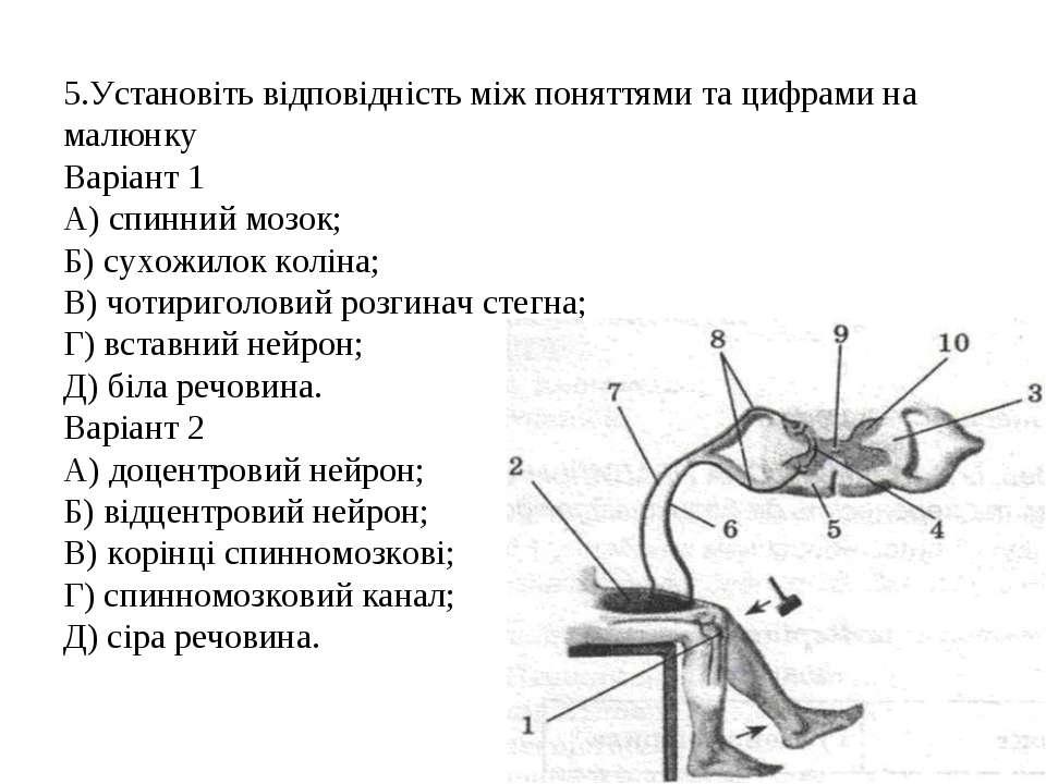 5.Установіть відповідність між поняттями та цифрами на малюнку Варіант 1 A) с...
