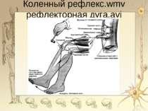 Коленный рефлекс.wmv рефлекторная дуга.avi *
