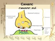 Синапс синапс.avi *
