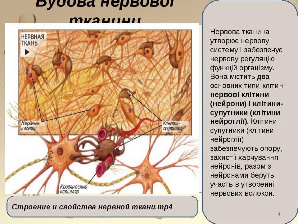 Будова нервової тканини Нервова тканина утворює нервову систему і забезпечує ...