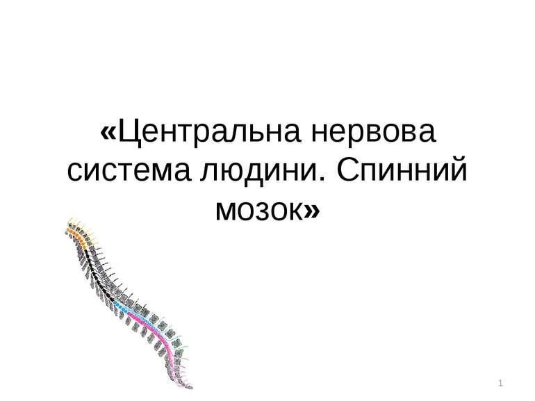 «Центральна нервова система людини. Спинний мозок» *
