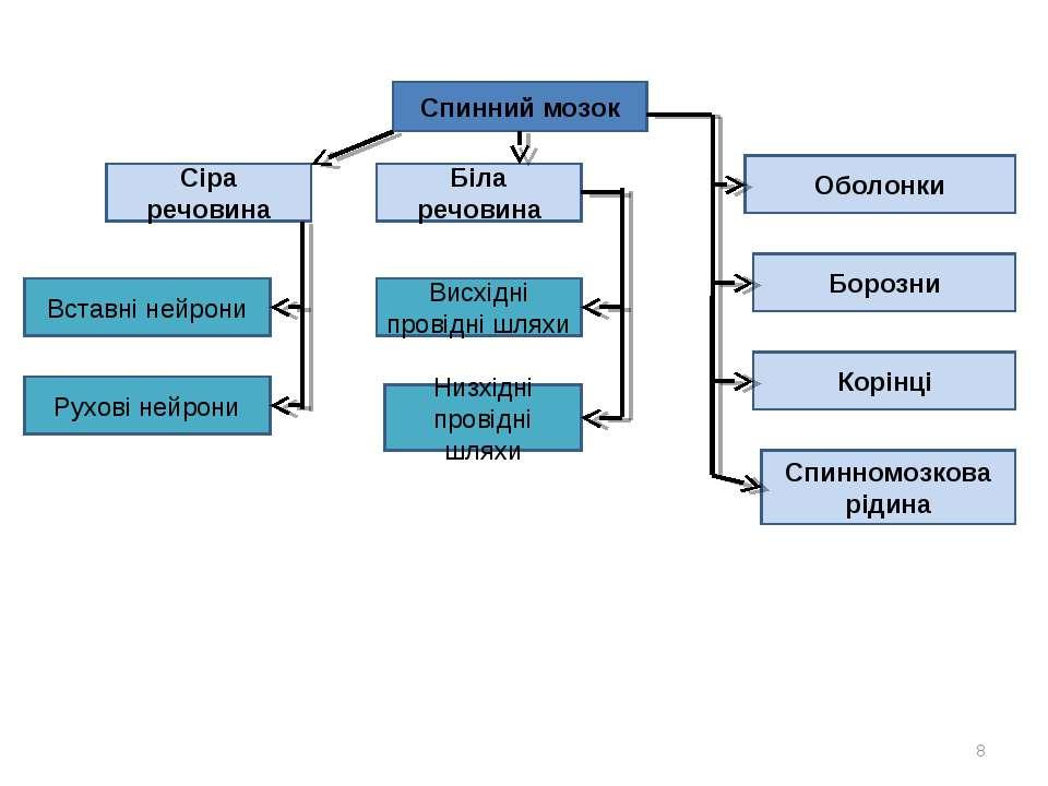 Спинний мозок Сіра речовина Біла речовина Оболонки Вставні нейрони Рухові ней...