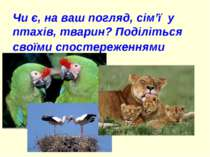 Чи є, на ваш погляд, сім'ї у птахів, тварин? Поділіться своїми спостереженнями