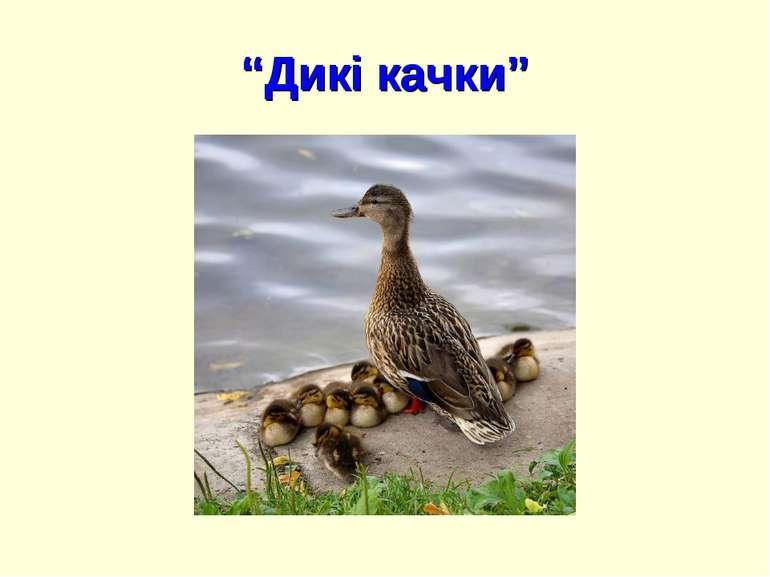 """""""Дикі качки"""""""