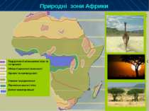 Природні зони Африки Твердолисті вічнозелені ліси та чагарники Області висотн...
