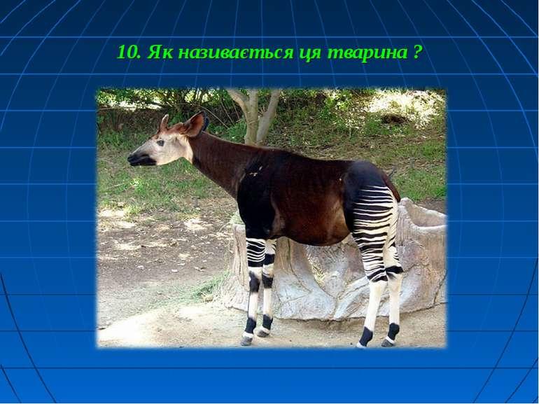 10. Як називається ця тварина ?