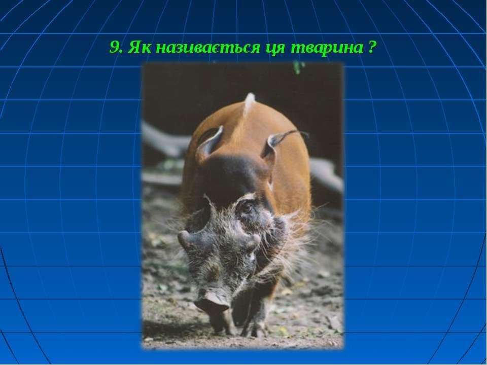 9. Як називається ця тварина ?