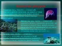 Біологічні ресурси Бе нтос(грец.βενθος— «глибина»)— сукупність організмів...