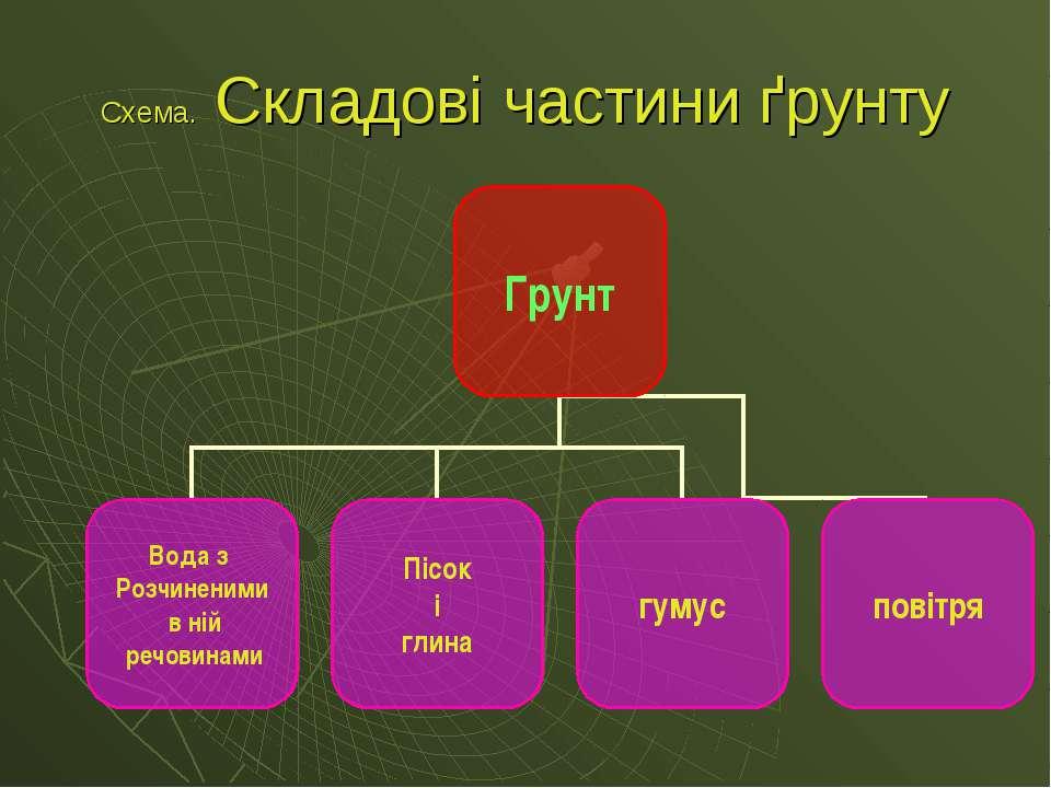 Схема. Складові частини ґрунту