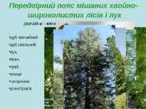 Передгірний пояс мішаних хвойно-широколистих лісів і лук (150-200 м - 400-600...