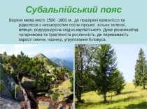 Субальпійський пояс Верхня межа якого 1500 -1800 м., де поширені криволісся т...