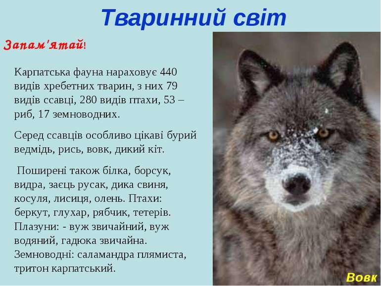 Тваринний світ Запам'ятай! Карпатська фауна нараховує 440 видів хребетних тва...