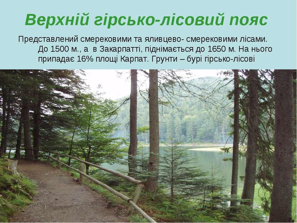 Верхній гірсько-лісовий пояс Представлений смерековими та яливцево- смерекови...