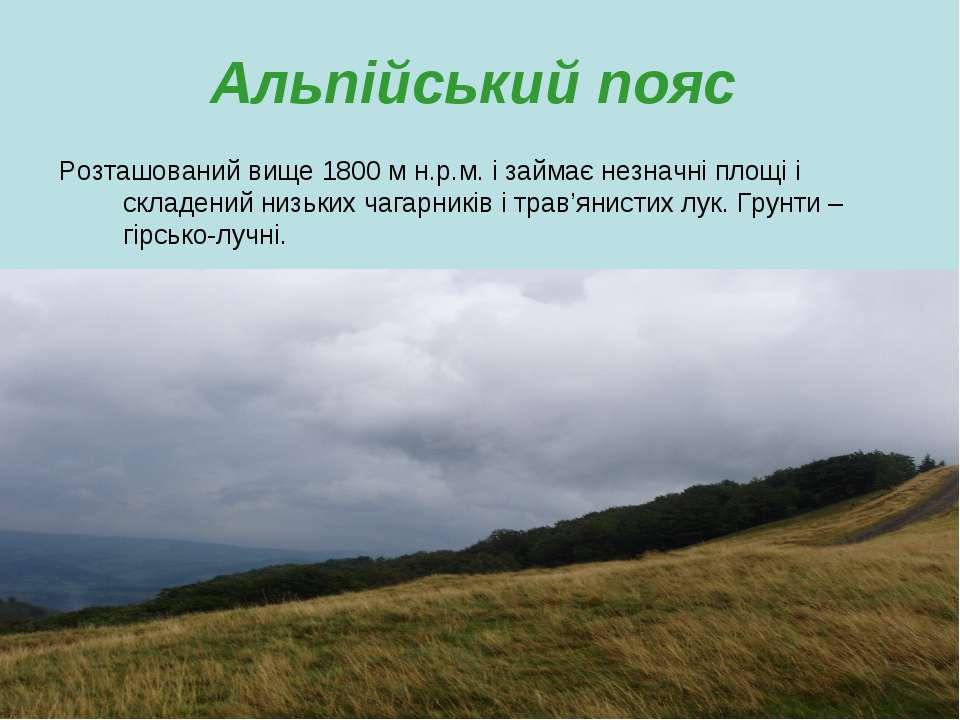 Альпійський пояс Розташований вище 1800 м н.р.м. і займає незначні площі і ск...