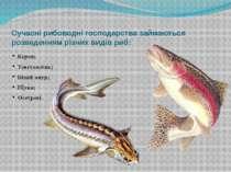 Сучасні рибоводні господарства займаються розведенням різних видів риб: Короп...