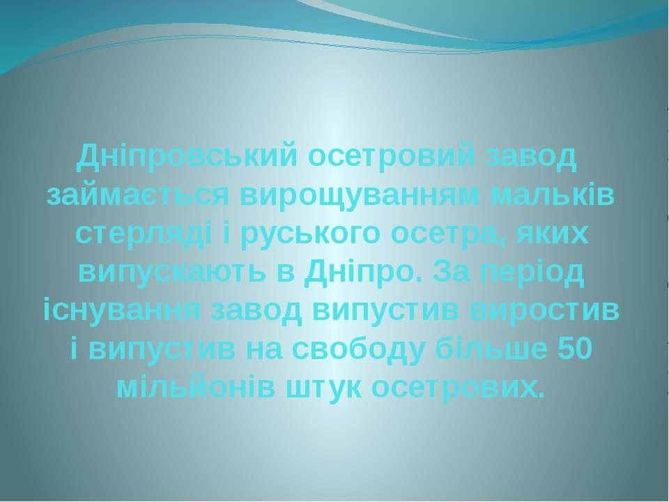 Дніпровський осетровий завод займається вирощуванням мальків стерляді і руськ...