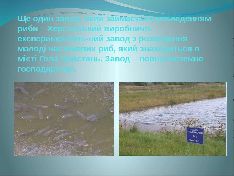Ще один завод, який займається розведенням риби – Херсонський виробничо-експе...