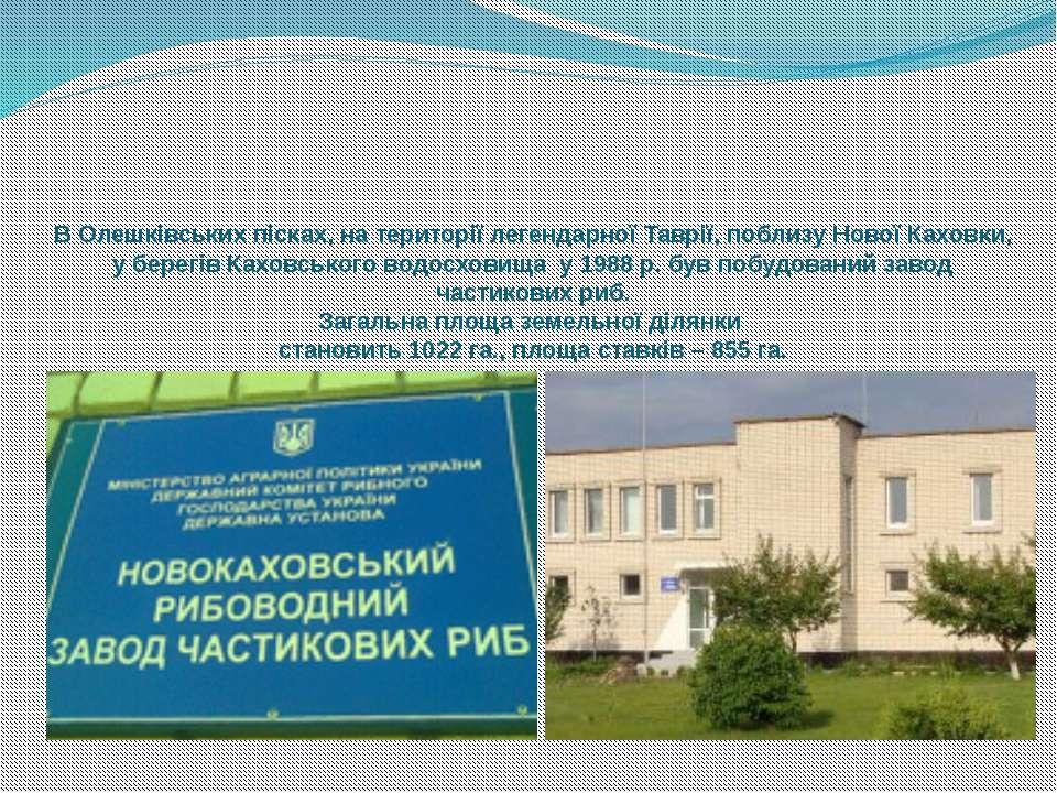 В Олешківських пісках, на території легендарної Таврії, поблизу Нової Каховки...