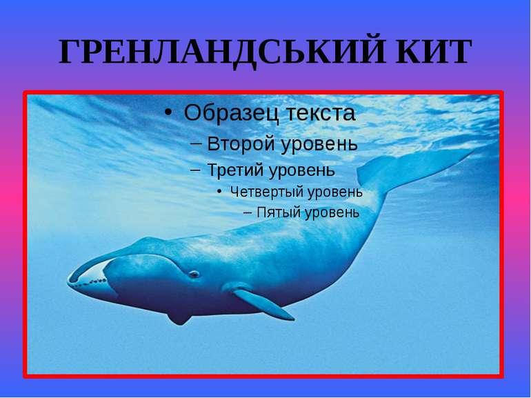 ГРЕНЛАНДСЬКИЙ КИТ