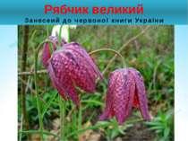 Рябчик великий Занесеий до червоної книги України