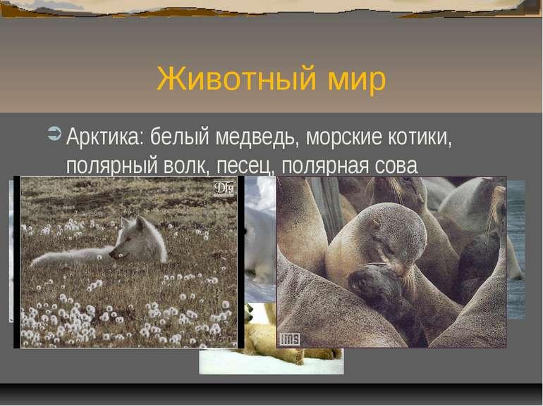 Животный мир Арктика: белый медведь, морские котики, полярный волк, песец, по...
