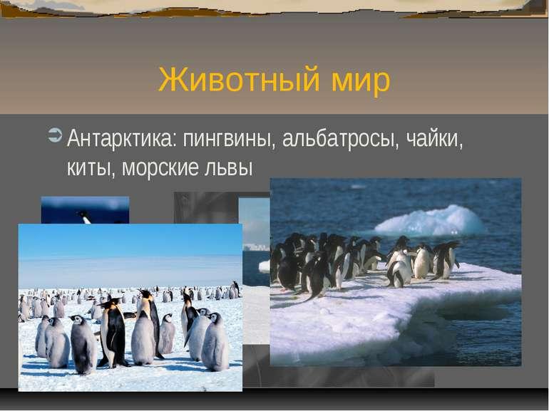 Животный мир Антарктика: пингвины, альбатросы, чайки, киты, морские львы