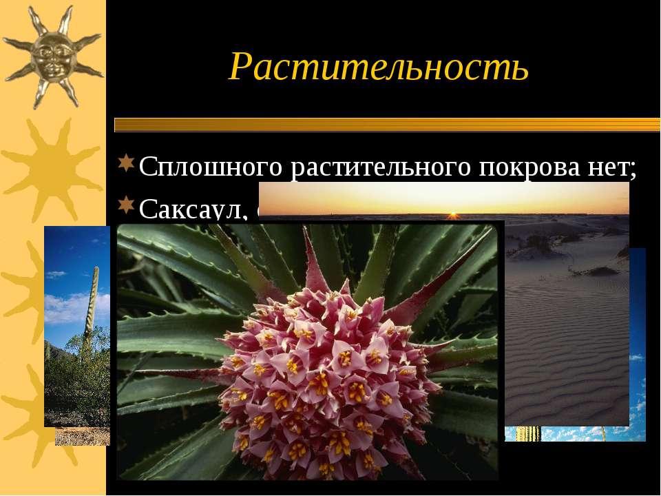 Растительность Сплошного растительного покрова нет; Саксаул, солеросы, кактусы