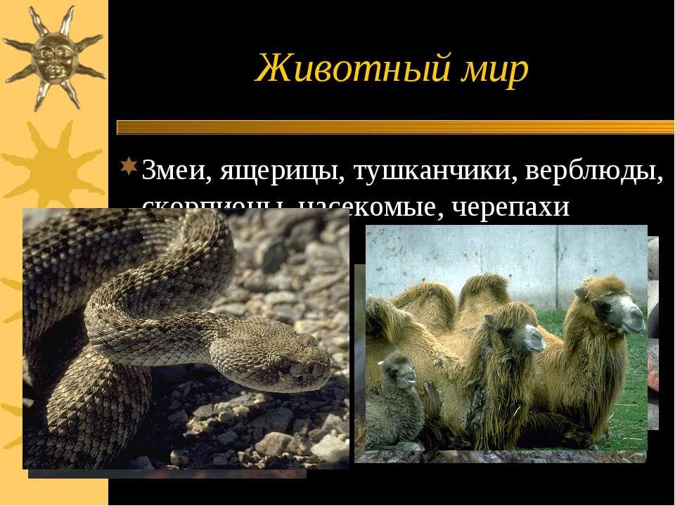 Животный мир Змеи, ящерицы, тушканчики, верблюды, скорпионы, насекомые, черепахи