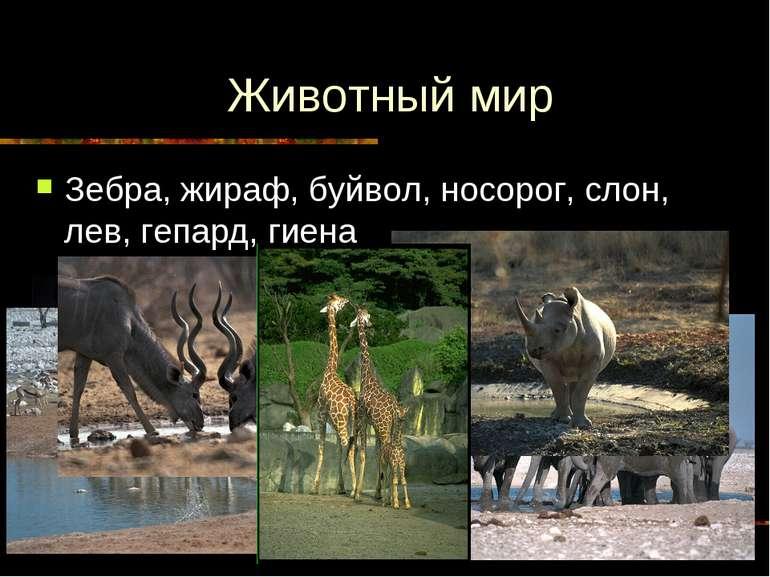 Животный мир Зебра, жираф, буйвол, носорог, слон, лев, гепард, гиена