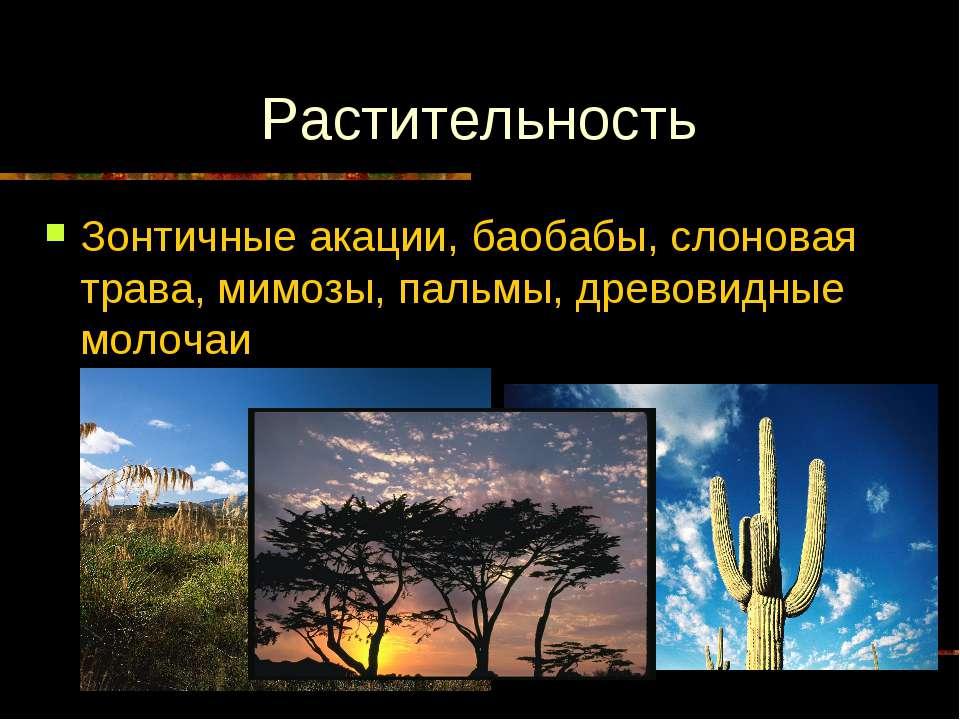 Растительность Зонтичные акации, баобабы, слоновая трава, мимозы, пальмы, дре...