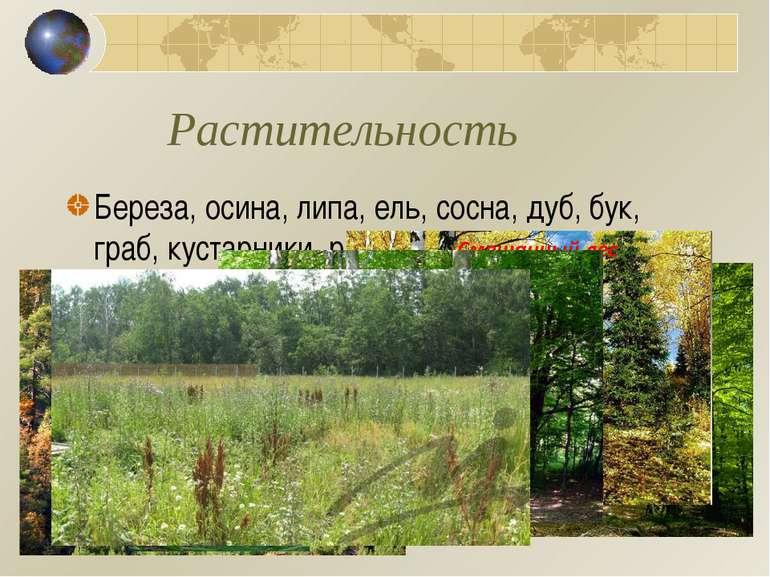Растительность Береза, осина, липа, ель, сосна, дуб, бук, граб, кустарники, р...