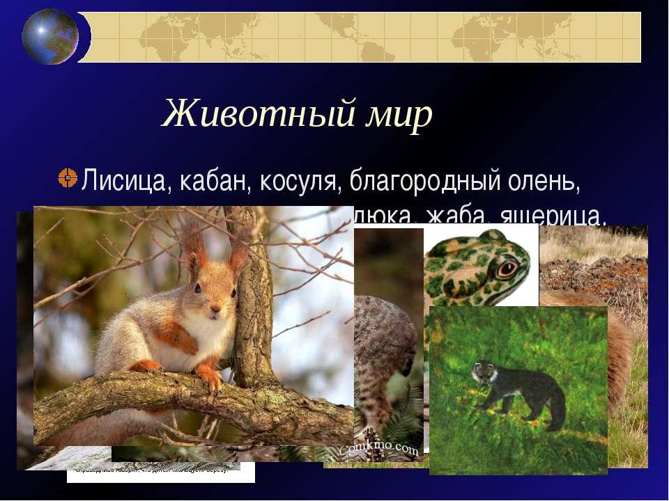 Животный мир Лисица, кабан, косуля, благородный олень, енот, медведь, волк, г...