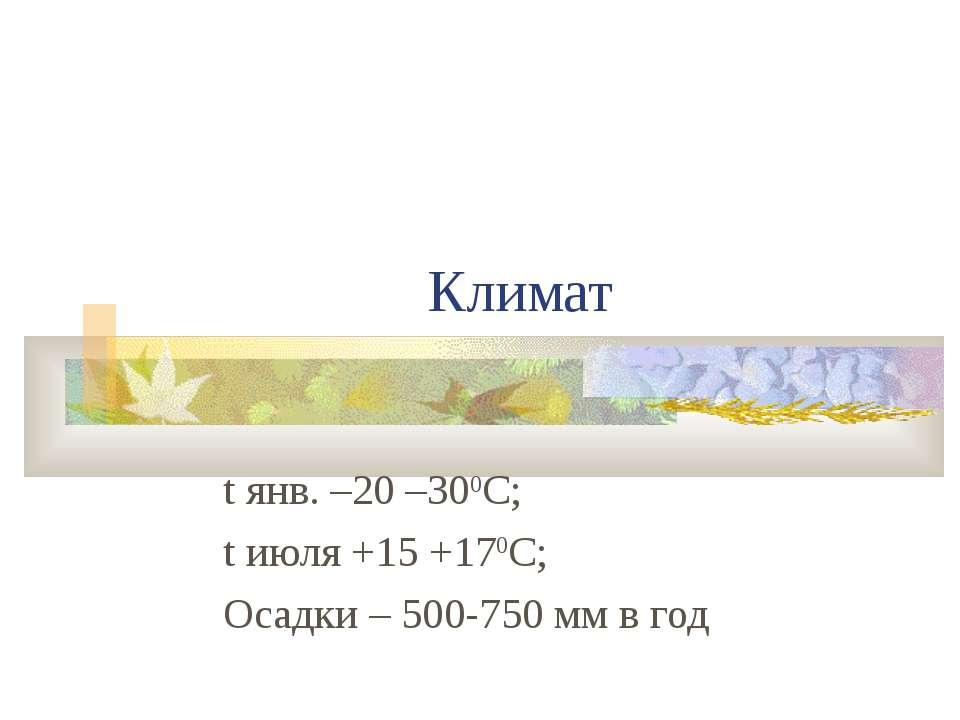 Климат t янв. –20 –300С; t июля +15 +170С; Осадки – 500-750 мм в год