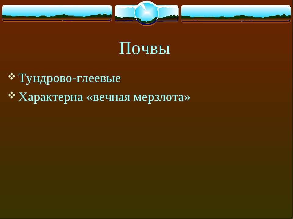 Почвы Тундрово-глеевые Характерна «вечная мерзлота»