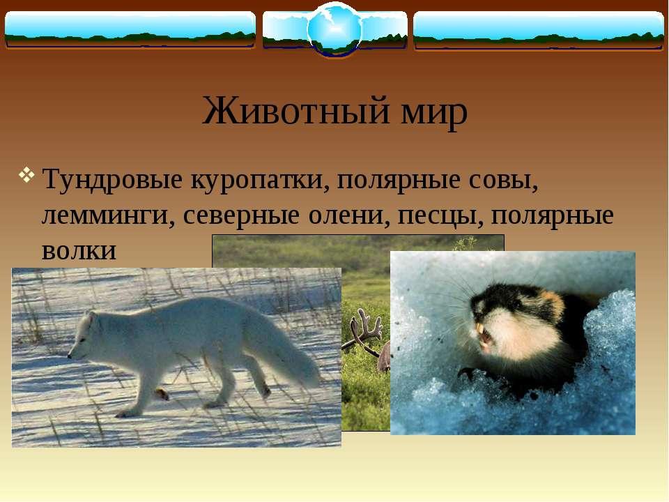 Животный мир Тундровые куропатки, полярные совы, лемминги, северные олени, пе...