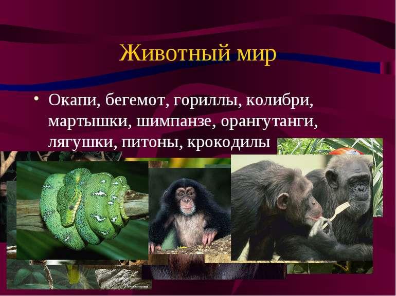 Животный мир Окапи, бегемот, гориллы, колибри, мартышки, шимпанзе, орангутанг...