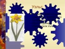 Уэльс Нарцисс-символ Уэльса, существует поверье, что он зацветает в День Свят...