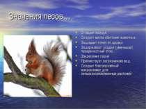 Значения лесов… Очищает воздух Создает места обитания животных Защищает почву...