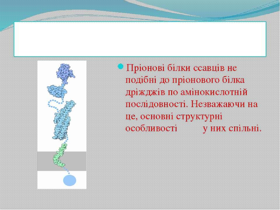 Властивості молекул Пріонові білки ссавців не подібні до пріонового білка дрі...