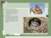 Виявляється, щурів можна використовувати в корисних цілях для населення. Їх м...