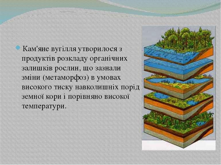 Кам'яне вугілля утворилося з продуктів розкладу органічних залишків рослин, щ...