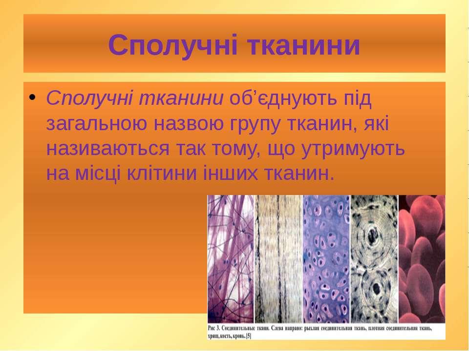 Сполучні тканини Сполучні тканини об'єднують під загальною назвою групу ткани...