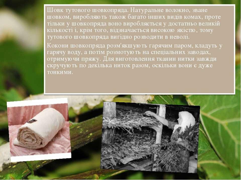 Шовк тутового шовкопряда. Натуральне волокно, зване шовком, виробляють також ...