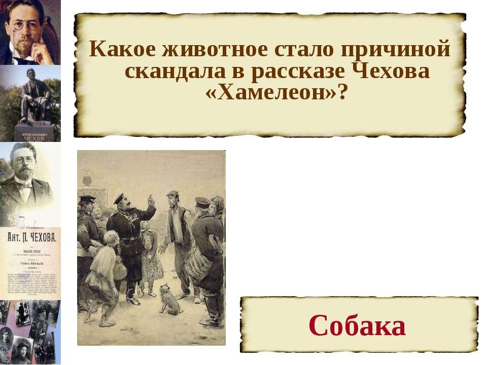 Какое животное стало причиной скандала в рассказе Чехова «Хамелеон»?