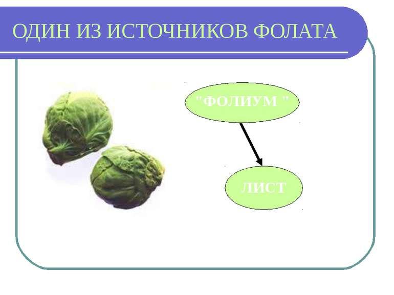 """ОДИН ИЗ ИСТОЧНИКОВ ФОЛАТА """"ФОЛИУМ """" ЛИСТ"""