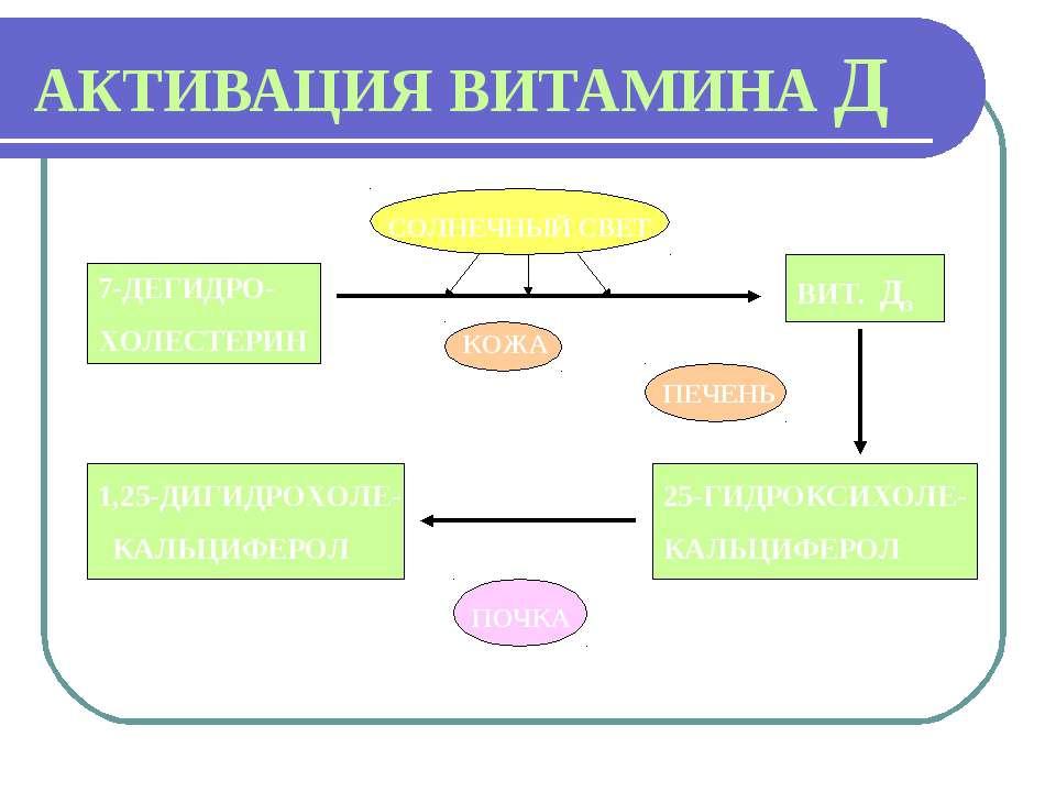 АКТИВАЦИЯ ВИТАМИНА Д 7-ДЕГИДРО- ХОЛЕСТЕРИН СОЛНЕЧНЫЙ СВЕТ КОЖА ВИТ. Д3 ПЕЧЕНЬ...