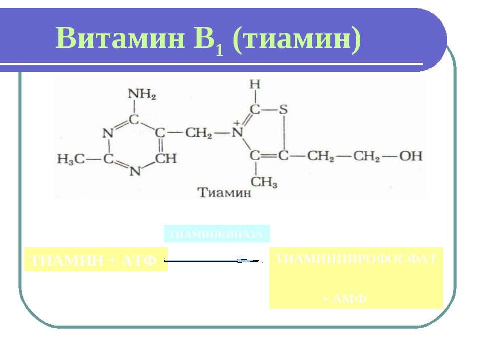 Витамин В1 (тиамин) ТИАМИН + АТФ ТИАМИНКИНАЗА ТИАМИНПИРОФОСФАТ + АМФ