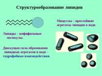 Структурообразование липидов Мицеллы – простейшие агрегаты липидов в воде. Ли...