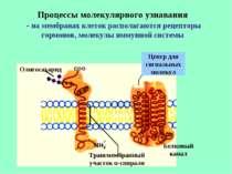Процессы молекулярного узнавания - на мембранах клеток располагаются рецептор...